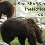 bears-featured